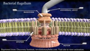 Bacterial Flagellum 300x169 - Charts from the book Holy Health